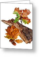 Autumn Oak Leaves And Acorns On White Greeting Card