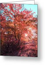 Autumn Path Reimagined Greeting Card