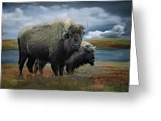 Autumn Plains Bison Greeting Card