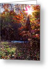 Autumn Starburst Greeting Card