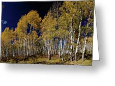 Autumn Walk In The Woods Greeting Card