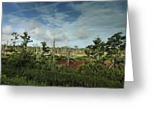 Autumnal Altamaha Greeting Card