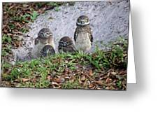 Baby Burrowing Owls Posing Greeting Card