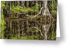 Bald Cypress Trees And Reflection, Six Greeting Card