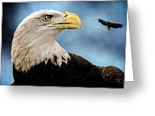 Bald Eagle And Fledgling  Greeting Card