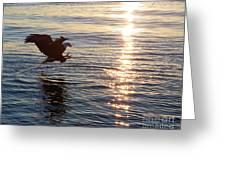 Bald Eagle At Sunset Greeting Card