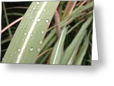 Bamboo And Water Greeting Card
