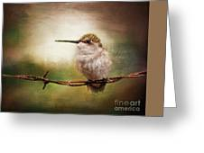 Barbed Wire Hummingbird Perch Greeting Card