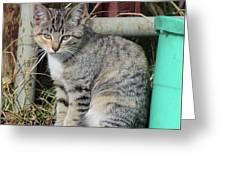 Barn Cat Greeting Card by Ann E Robson