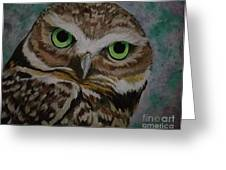 Barned Owl Greeting Card