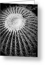 Barrel Cactus Black And White Greeting Card