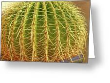 Barrel Cactus Royal Palms Phoenix Greeting Card