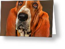 Basset Dog Portrait Greeting Card