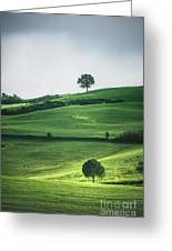 Bathed In Emerald Greeting Card