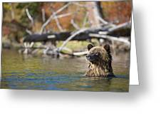 Bathing Blonde Grizzly Greeting Card