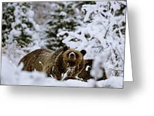 Bear In The Snow Greeting Card