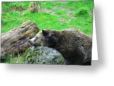 Bear Sleeping On A Rock. Greeting Card
