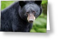 Bear Stare Greeting Card