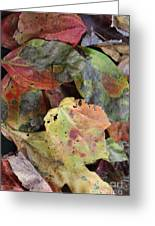 Beauti Fall Greeting Card