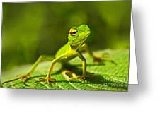 Beautiful Animal In The Nature Habitat Greeting Card