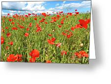 Beautiful Fields Of Red Poppies Greeting Card