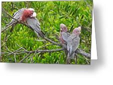 Beautiful Galah Birds With Babies. Wilsons Promontory National Park, Australia Greeting Card