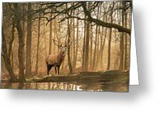 Beautiful Landscape Image Of Still Stream In Lake District Fores Greeting Card