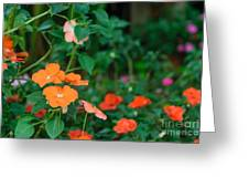 Beautiful Orange Flower, Naturally Greeting Card