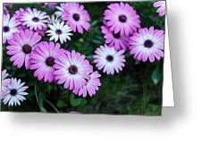 Beautiful Pink Flowers In Grass Greeting Card