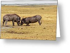Beauty On The Hoof, The Warthog Greeting Card