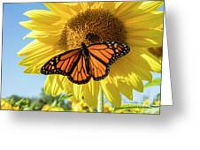 Beauty On The Sunflower Greeting Card