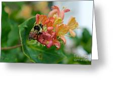 Bee On Wild Honeysuckle Greeting Card by Ann E Robson