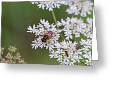 Bee Relaxing On A Flower. Greeting Card