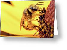 Bee Vs Pollen Greeting Card by Brian Hale