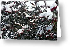 Berries And Snow Greeting Card