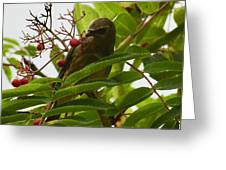 Berries And Waxwing Greeting Card