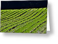 Between The Rows Greeting Card
