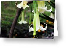 Beware The Angel's Trumpet Greeting Card by Rick Locke