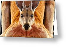 Big Boy Red Kangaroo   Greeting Card