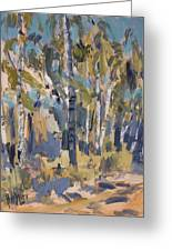 Birch Trees Along The Pond De Melle Greeting Card