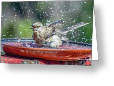 Bird In A Bath Greeting Card