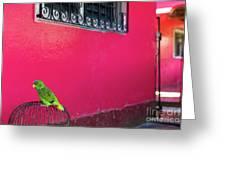 Bird On Cage Greeting Card