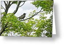 Bird Resting On Branch Greeting Card