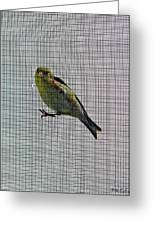 Bird Watching Reversed Greeting Card