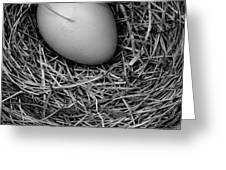 Birds Nest Black And White Greeting Card by Edward Fielding
