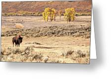 Bison And Cottonwoods Greeting Card
