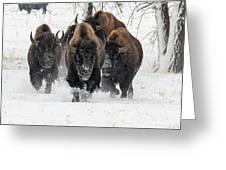 Bison Bulls Run In The Snow Greeting Card