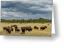 Bison In Yellowstone Greeting Card