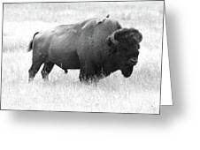 Bison - Monochrome Greeting Card