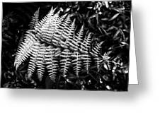 Black And White Fern Greeting Card by Louis Dallara